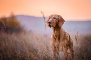 karmy-proformance-wicko-szkolenie-psow-owczarki-produkty-w-unii-europejskiej