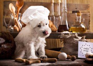 karmy-proformance-wicko-szkolenie-psow-owczarki-zasady-zywienia-kucharz