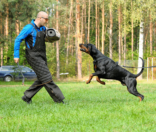 karmy-proformance-wicko-szkolenie-psow-o-nas-trening