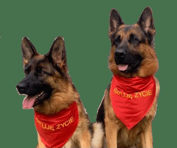 karmy-proformance-wicko-szkolenie-psow-popup-owczarki